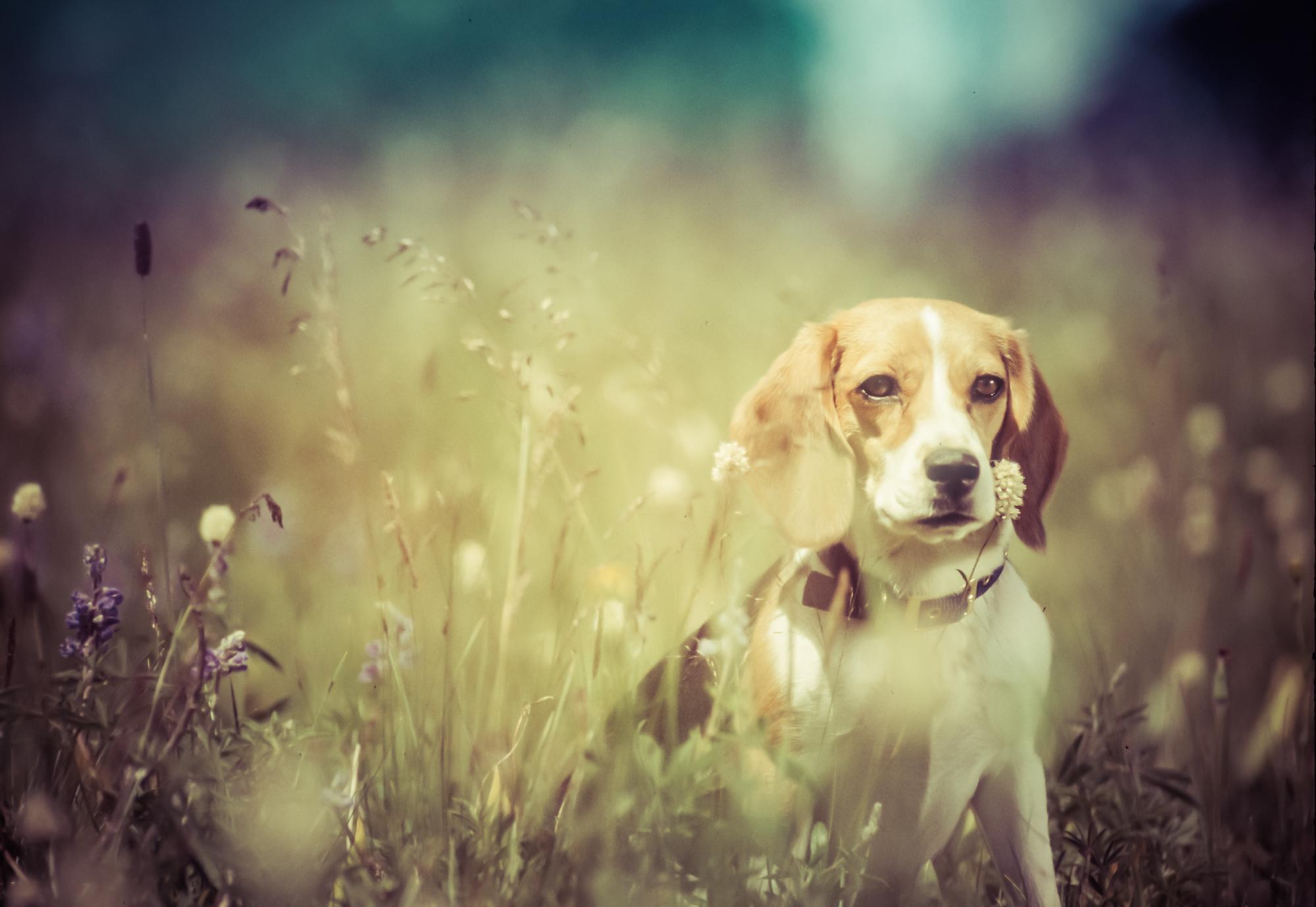 rick-meoli-commercial-photographer-outdoor-animal-lifestyle-repheads-27
