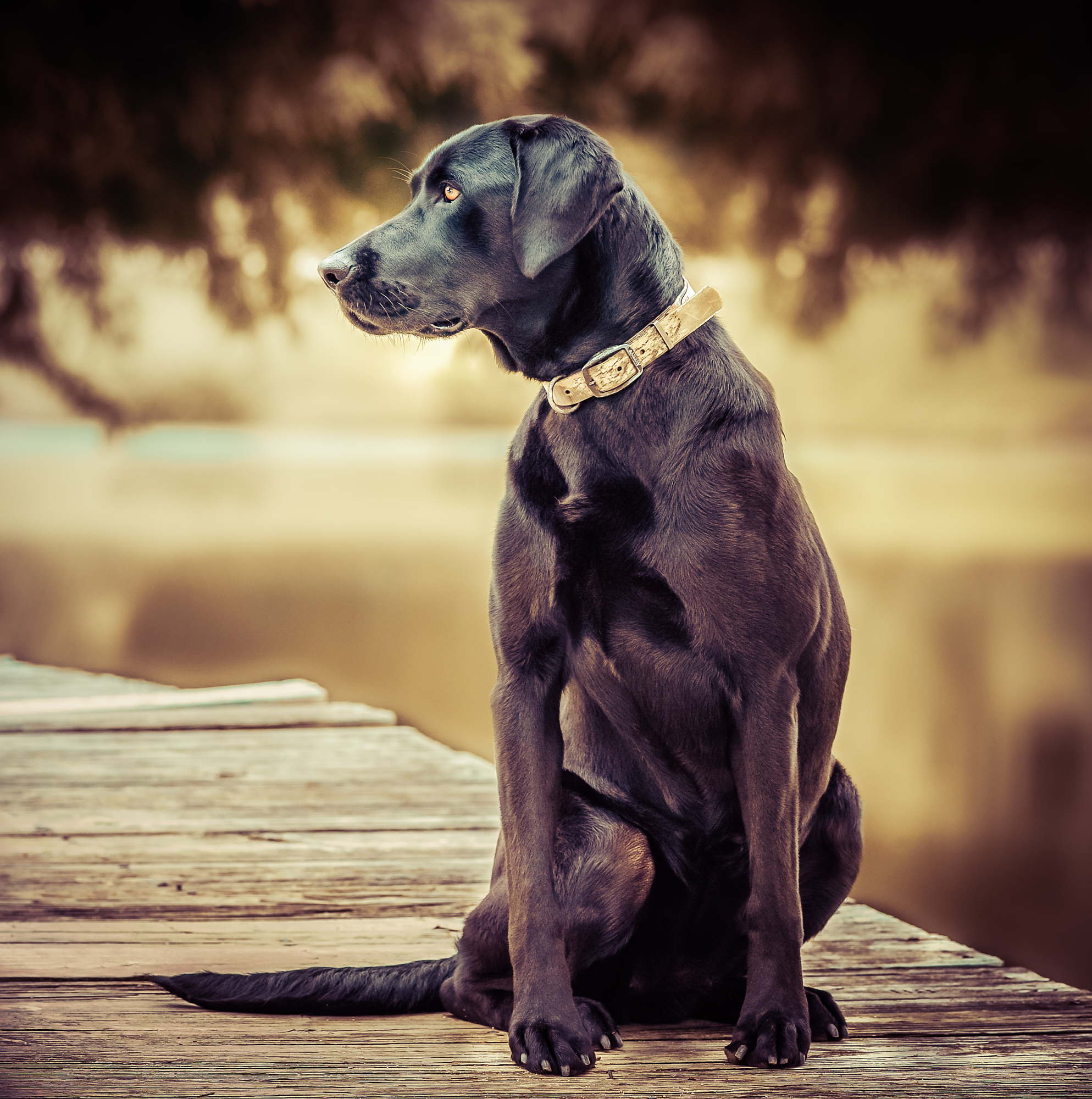 rick-meoli-commercial-photographer-outdoor-animal-lifestyle-repheads-43