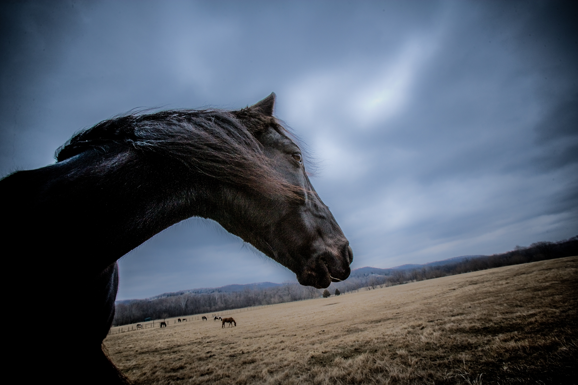 rick-meoli-commercial-photographer-outdoor-animal-lifestyle-repheads-71