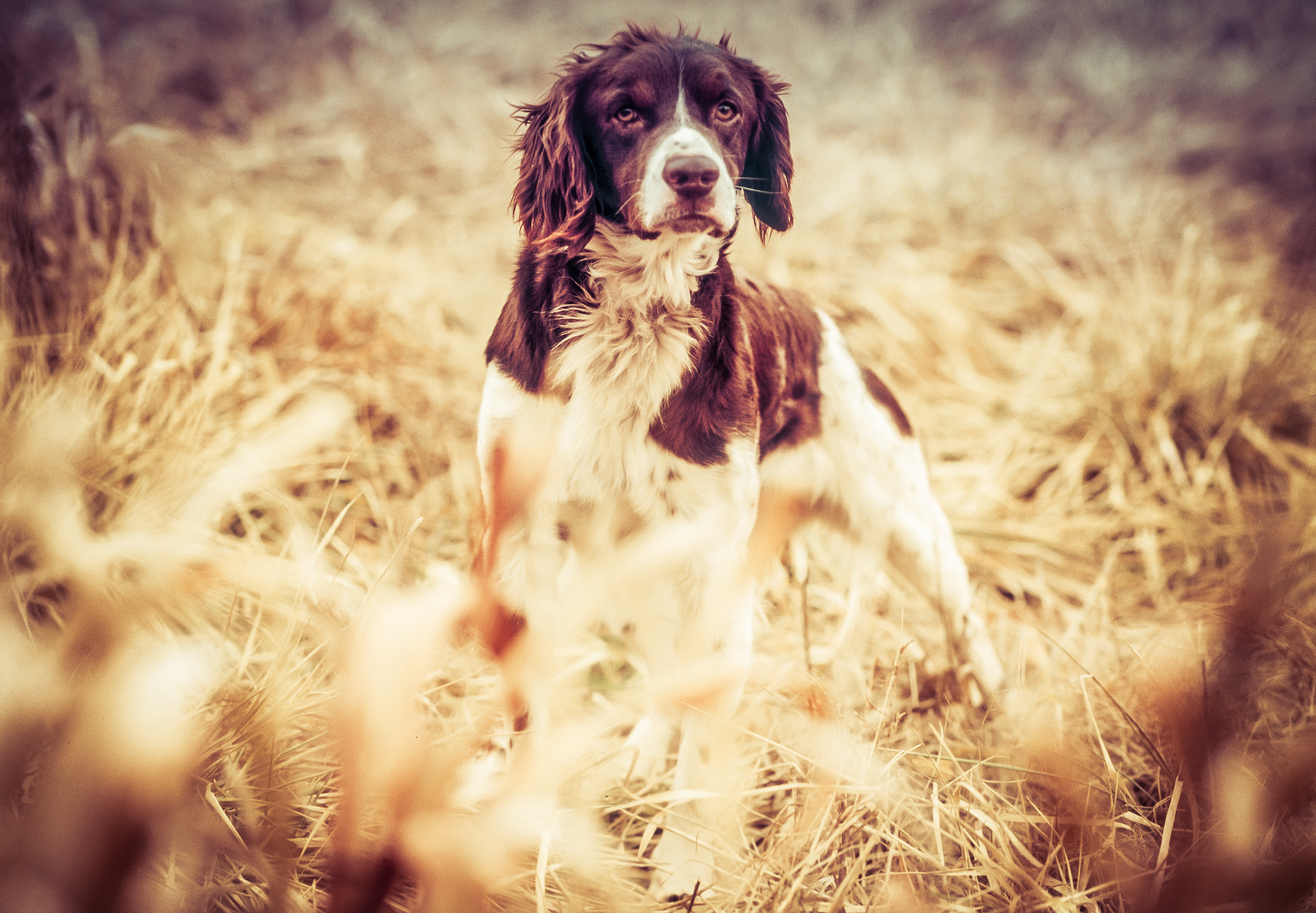rick-meoli-commercial-photographer-outdoor-animal-lifestyle-repheads-80