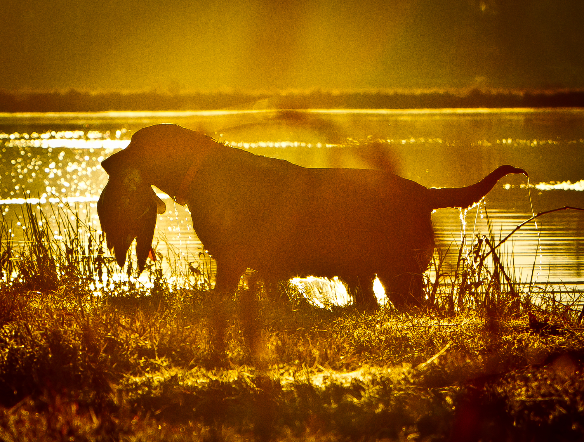 rick-meoli-commercial-photographer-outdoor-animal-lifestyle-repheads-82